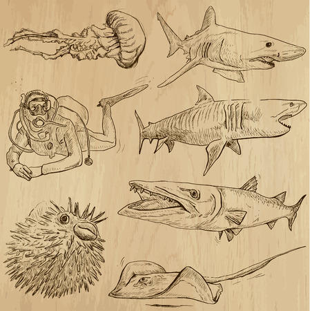 comprise: Underwater, Sea Life (vector set no.2)  - Collection of an hand drawn illustrations. Description: Each drawing comprise of two basic layers of outlines, the colored background is isolated. Illustration
