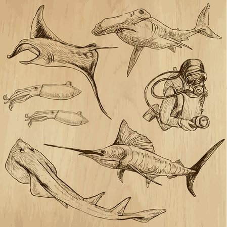 Underwater, Sea Life (vector set no.3)  - Collection of an hand drawn illustrations. Description: Each drawing comprise of two basic layers of outlines, the colored background is isolated. Vector