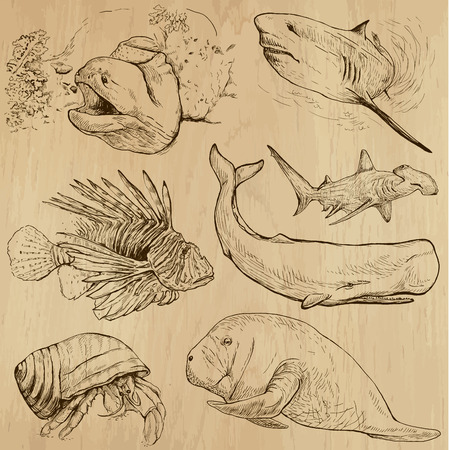 bull shark: Underwater, Sea Life (vector set no.4)  - Collection of an hand drawn illustrations. Description: Each drawing comprise of two basic layers of outlines, the colored background is isolated. Illustration