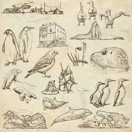 Travel series: POLAR REGIONS (Antarctica and Greenland) - Collection (no.2) of an hand drawn illustrations. Description: Full sized hand drawn illustrations drawing on old paper. illustration
