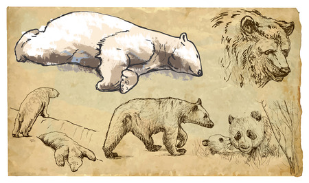 BEARS (Ursidae family). Collection of an hand drawn illustrations (originals, no tracing). Drawings are editable in layers and groups. The color layers are separated. Vector