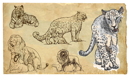 BIG CATS. Collection of an hand drawn illustrations (originals, no tracing). Drawings are editable in layers and groups. The color layers are separated. Illustration