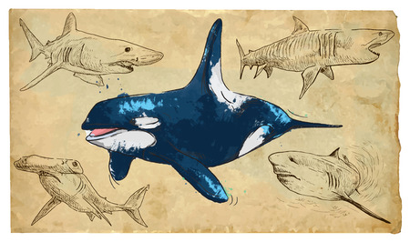 SEA PREDATORS. Collection of an hand drawn illustrations (originals, no tracing). Drawings are editable in layers and groups. The color layers are separated. Vector