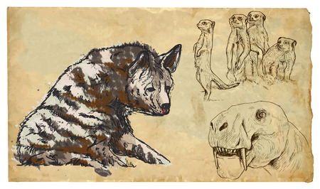 FELIFORMIA (hyena, meerkats and smilodon). Collection of an hand drawn illustrations (originals, no tracing). Drawings are editable in layers and groups. The color layers are separated.