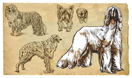 afghan hound: DOGS (as a national treasure). Collection of an hand drawn illustrations (originals, no tracing). Drawings are editable in layers and groups. The color layers are separated.