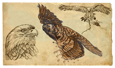 raptors: BIRDS OF PREY (raptors). Collection of an hand drawn illustrations (originals, no tracing). Drawings are editable in layers and groups. The color layers are separated.
