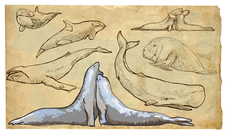 SEA MAMMALS. Collection of an hand drawn illustrations (originals, no tracing). Drawings are editable in layers and groups. The color layers are separated. Stock Illustratie