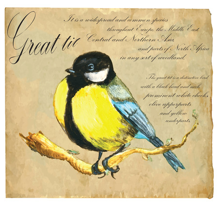 tit: An hand painted illustration into vector picture. Bird: Great Tit