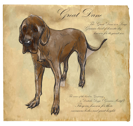 Great Dane (German Mastiff) - an hand drawn illustration (vector). Drawing comprises of three layers of lines plus colored layer, the colored background is isolated. Illustration