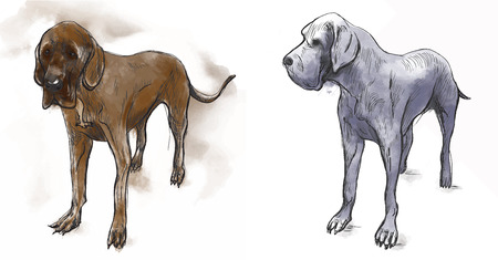three layer: Great Dane (German Mastiff) - an hand drawn illustration (vector). Drawing comprises of three layers of lines plus colored layer, isolated on white.