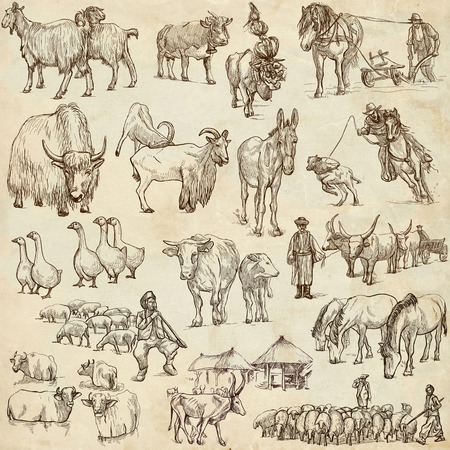 draft horse: Animals around the world (set no.12 - FARM ANIMALS) - Collection of an hand drawn illustrations. Description: Full sized hand drawn illustrations drawing on white.
