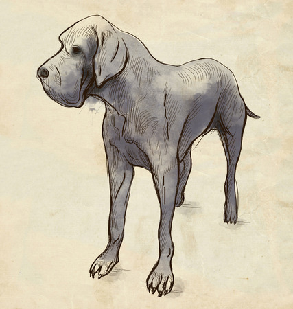 enormous: Great Dane (German Mastiff) - An hand drawn illustration. Description: Full sized hand drawn illustration (Original). Stock Photo