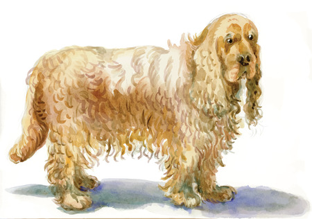 Cocker Spaniel - An hand painted illustration, water colors technique. Illustration