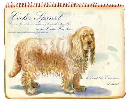 cocker: Cocker Spaniel - An hand painted illustration, water colors technique. Illustration
