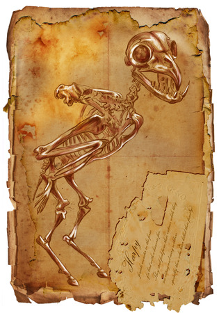 bestiary: Illustration of a series of legendary animals and monsters (skeleton): HARPY. An hand drawn and painted full sized illustration (Original). Version: Drawing on old vintage paper with text. Background: slightly blurry, Lines: sharp. Stock Photo