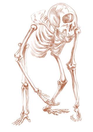 esoterismo: Ilustración de una serie de animales míticos y monstruos (esqueleto): CYCLOPS. Una mano dibujado y pintado ilustración de tamaño completo (Original). Versión: Dibujo sobre fondo blanco.