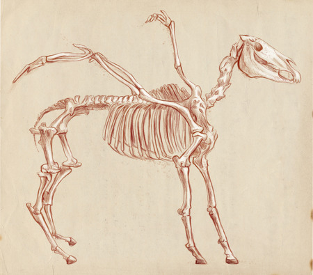 bestiary: Illustration of a series of legendary animals and monsters (skeleton): PEGASUS. An hand drawn and painted full sized illustration (Original). Version: Drawing on old paper.