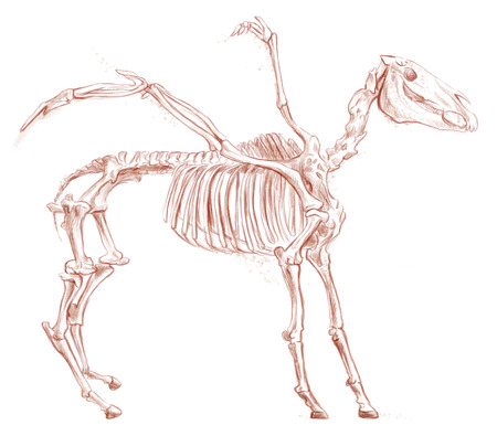 bestiary: Illustration of a series of legendary animals and monsters (skeleton): PEGASUS. An hand drawn and painted full sized illustration (Original). Version: Drawing on white background. Stock Photo