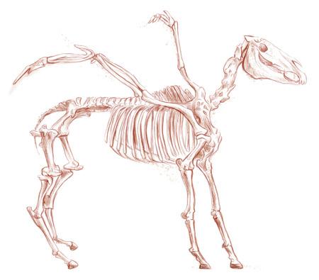 esoterismo: Ilustración de una serie de animales y monstruos legendarios (esqueleto): PEGASUS. Una mano dibujado y pintado ilustración de tamaño completo (Original). Versión: Dibujo sobre fondo blanco.