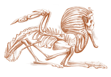 bestiary: Illustration of a series of legendary animals and monsters (skeleton): SPHINX. An hand drawn and painted full sized illustration (Original). Version: Hand drawing on white background.