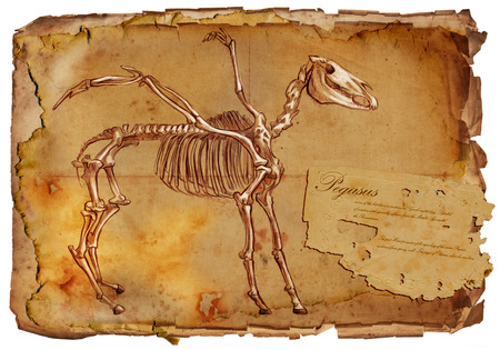 bestiary: Illustration of a series of legendary animals and monsters (skeleton): PEGASUS. An hand drawn and painted full sized illustration (Original). Version: Drawing on old vintage paper with text. Background: slightly blurry, Lines: sharp. Stock Photo