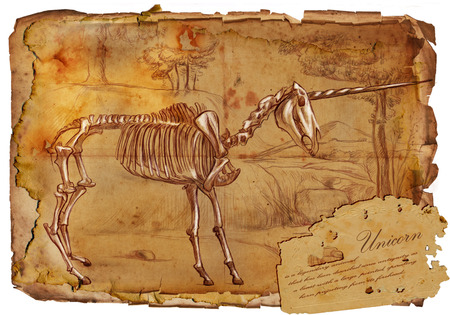 bestiary: Illustration of a series of legendary animals and monsters (skeleton): UNICORN. An hand drawn and painted full sized illustration (Original). Version: Hand drawing on old vintage paper with text. Background: slightly blurry, Lines: sharp.