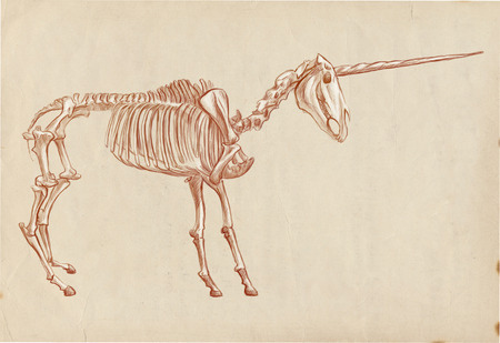 bestiary: Illustration of a series of legendary animals and monsters (skeleton): UNICORN. An hand drawn and painted full sized illustration (Original). Version: Hand drawing on old paper.