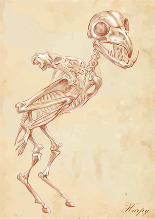 bestiary: An hand drawn vector illustration. Series of legendary animals and monsters (skeleton): HARPY. Drawings comprise at least three layers of lines, the colored background is isolated. Easy editable in layers and groups.