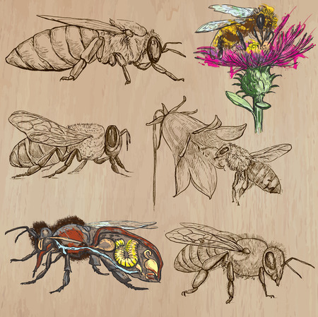 sweetshop: BEES, BEEKEEPING and HONEY. Collection of an hand drawn vector illustrations (pack no.2). Each drawing comprises of three or four layers of lines, the colored background is isolated.