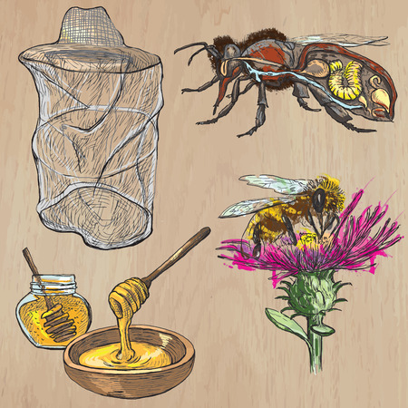 sweetshop: BEES, BEEKEEPING and HONEY. Collection of an hand drawn vector illustrations (pack no.1). Each drawing comprises of three or four layers of lines, the colored background is isolated. Illustration