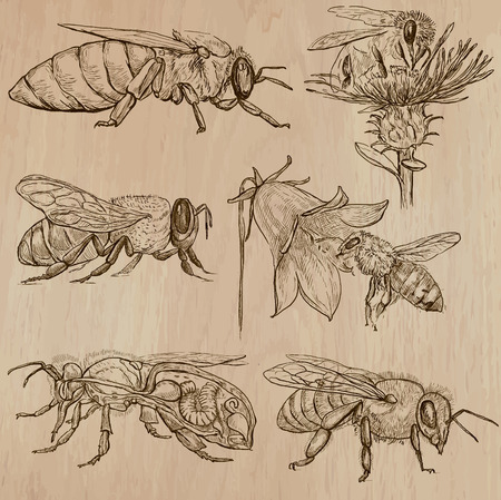 sweetshop: BEES, BEEKEEPING and HONEY. Collection of an hand drawn vector illustrations (pack no.3). Each drawing comprises of three or four layers of lines, the colored background is isolated.