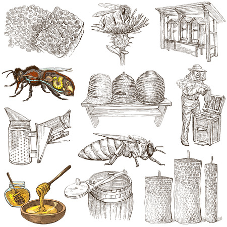 BEES, BEEKEEPING and HONEY - Collection of an hand drawn illustrations. Full sized hand drawn illustrations, Originals, drawing on white background. (pack no.1)