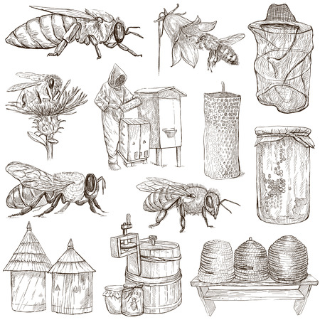 sized: BEES, BEEKEEPING and HONEY - Collection of an hand drawn illustrations. Full sized hand drawn illustrations, Originals, drawing on white background. (pack no.4) Stock Photo