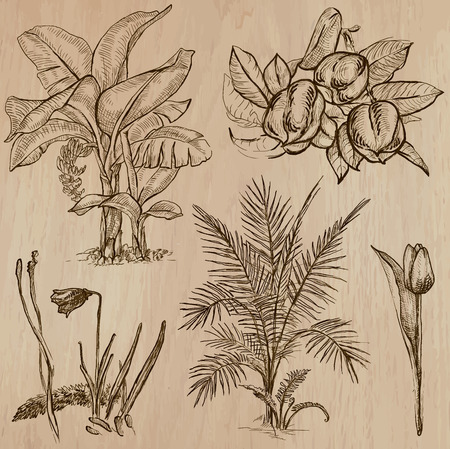 Flowers, Trees, Plants. Collection of an hand drawn vector illustrations (line art vectors - pack no.7). Each drawing comprises of three or four line layers. The colored wooden background is isolated. Easy editable.