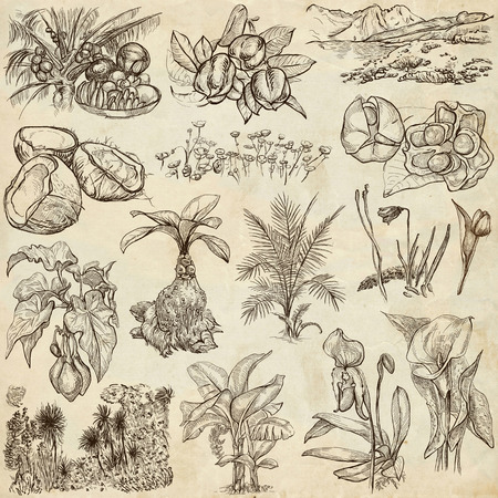 herbage: Flowers. Trees, Plants around the World. Collection of an hand drawn full sized illustrations (freehand sketches, originals). Drawings on old paper (pack no.3).