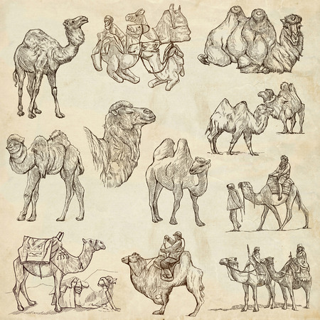 humps: CAMELS - Collection of an hand drawn illustrations. Description - Full sized hand drawn illustrations, freehand sketches, drawing on old paper.