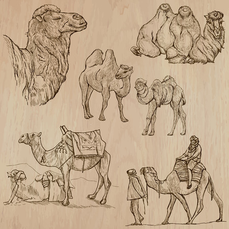 CAMELS (set no.1) - Collection of an hand drawn vector illustrations. Each drawing comprise a few layers of lines, the colored background is isolated. Easy editable.