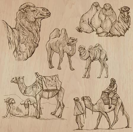 Kamelen (set no.1) - Het verzamelen van een hand getrokken vector illustraties. Elke tekening bestaat uit een paar lagen van de lijnen, wordt de gekleurde achtergrond geïsoleerd. Gemakkelijk bewerkbare. Vector Illustratie
