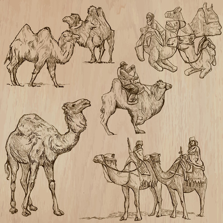 humps: CAMELS (set no.2) - Collection of an hand drawn vector illustrations. Each drawing comprise a few layers of lines, the colored background is isolated. Easy editable.