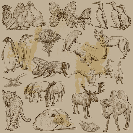 comprise: ANIMALS around the World (set no.25) - Collection of an hand drawn vector illustrations. Each drawing comprise a few layers of lines, the colored background is isolated. Easy editable.
