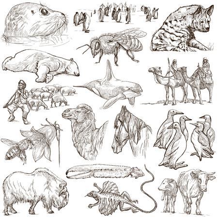 13th: ANIMALS pack around the World no. An 13th Collection of hand drawn illustrations. Full sized hand drawn illustrations sketches freehand drawing on white background isolated on white.