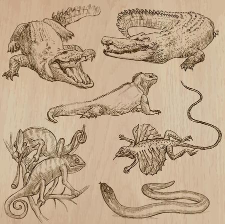lagartija: Lagartos empacar una colección no.1 de dibujado a mano ilustraciones de vectores. Cada dibujo compris unas pocas capas de las líneas de color de fondo se aísla. Fácil editable.