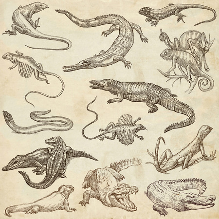 anguis: Lizards Collection of an hand drawn illustrations. Description Full sized hand drawn illustrations sketches freehand drawing on old paper. Stock Photo