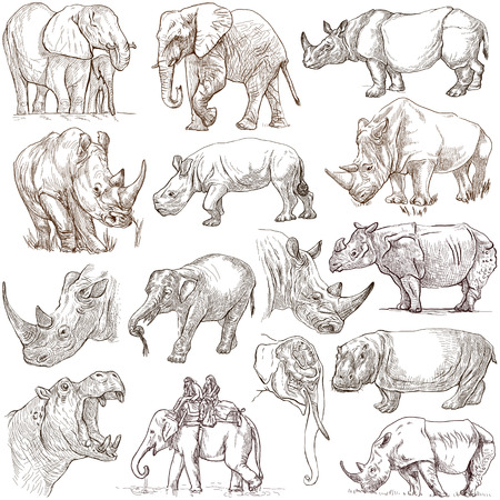 sized: HEAVY ANIMALS (Elephants, Hippos and Rhinos) - Collection of an hand drawn illustrations. Description - Full sized hand drawn illustrations, freehand sketches, drawing on white background.