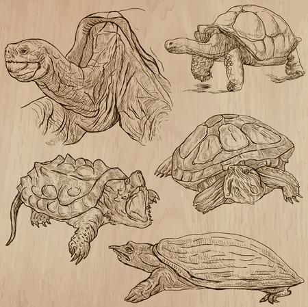 schildkr�te: SCHILDKR�TEN (Packung no.3) - Sammlung von einer Hand gezeichnet Vektor-Illustrationen. Jede Zeichnung umfassen ein paar Schichten von Linien wird der farbige Hintergrund. Einfach bearbeitet werden. (Name des enthaltenen Spezies.)