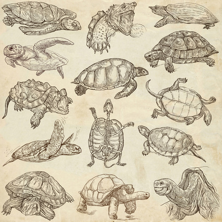 sized: TURTLES (Tortoises) - Collection of an hand drawn illustrations. Description - Full sized hand drawn illustrations. Freehand sketches, drawing on old paper.