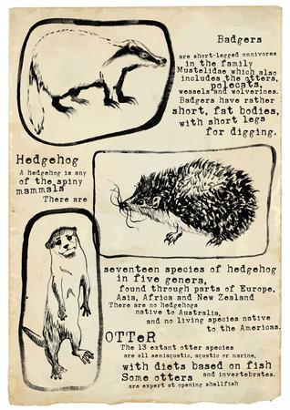 loutre: Une illustration tir�e par la main, placard - Animaux. Badger, H�risson et Otter. Technique: encre noire.