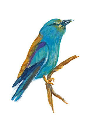 white bird: An hand painted illustration on white - Bird, European roller (original, acrylic painting)