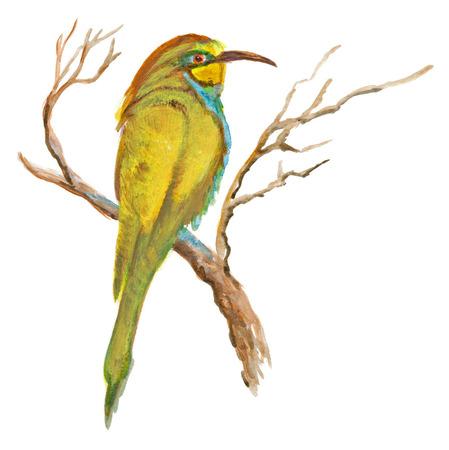 white bird: An hand painted illustration on white - Bird, European bee-eater (original, acrylic painting)