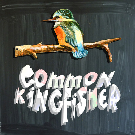 common kingfisher: An hand painted illustration (bird) and mixed media (alphabet and blackboard) illustration (blackboard is slightly blurred). BIRD - - COMMON KINGFISHER